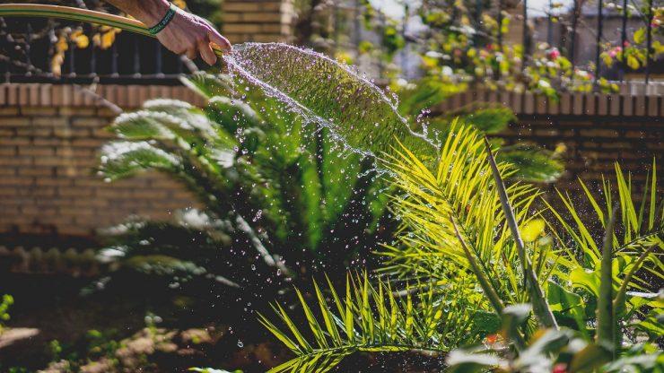 arroser jardin